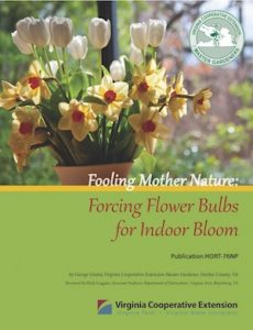 forcing bulbs publication cover