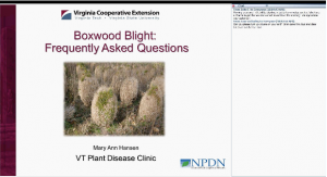 screen shot of boxwood blight webinar